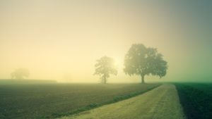 Dawn Trees Away Fog Landscape - jplenio / Pixabay
