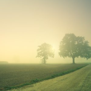 Dawn Trees Away Fog Landscape  - jplenio / Pixabay