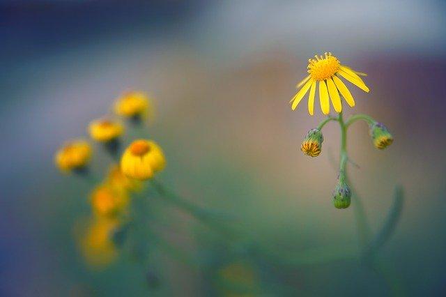 Blossom Bloom Autumn Field  - jplenio / Pixabay