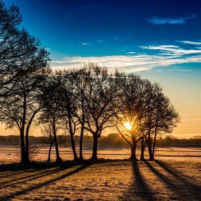 Nature Tree Dawn Landscape Sunrise  - PaulSchneider / Pixabay